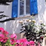 Villa flora samos apartment & Studios big, green garden